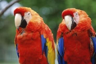 N'essayez pas d'acheter un iguane ou un perroquet en souvenir du Mondial | Brésil | Les voyages - Eric Abadie | Scoop.it