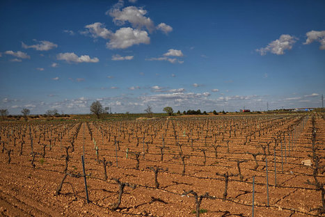 Spain's #Wine Industry Is Hiccuping From Its Excesses | Vitabella Wine Daily Gossip | Scoop.it