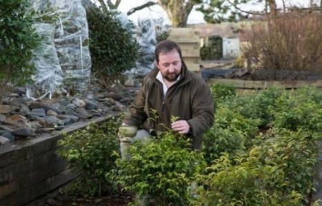 En Ecosse, un thé d'exception pousse au pied des Highlands | Cette nature qui nous soigne | Scoop.it