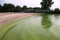 Stay out of the water: A toxic algae slideshow | Water Stewardship | Scoop.it