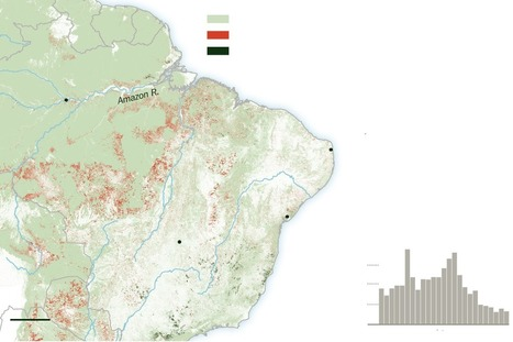 Restored Forests Breathe Life Into Efforts Against Climate Change   Cover-up by Design   Scoop.it