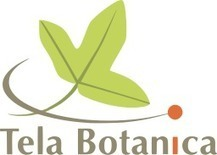 Plate-forme MOOC de Tela Botanica | MOOC in Moodle | Scoop.it