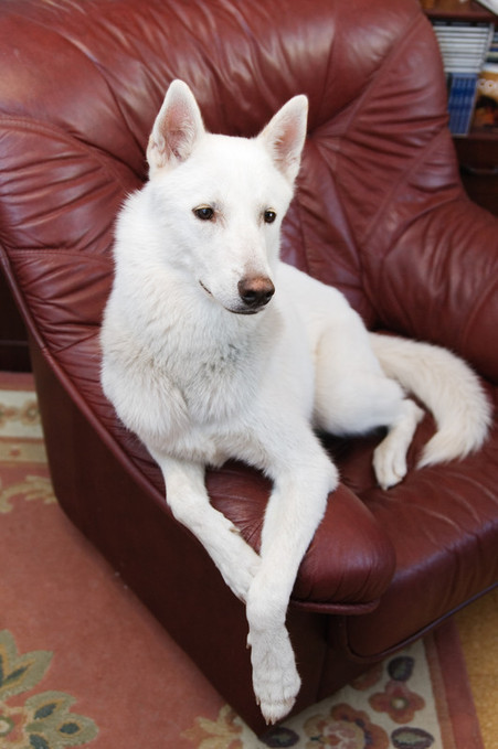 Tips for keeping Dog Fur Under Control   Pets   Scoop.it