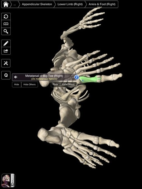 Essential Skeleton - An Excellent iPad App for Students | iPads in High School | Scoop.it
