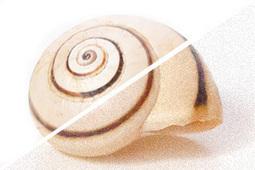 7 Consejos Imprescindibles Para Dominar La Sensibilidad ISO | exposició | Scoop.it