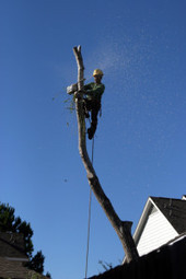 Hire a Professional for the Removal of Trees   Aspen Tree Service   Scoop.it