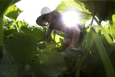 New go-to career for New England's young: Farming | Food issues | Scoop.it