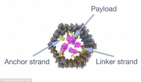 DNA 'cage' holding a payload of drugs set to begin clinical trial soon | WWWBiology | Scoop.it