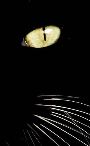 Cat..... | fsdg | Scoop.it
