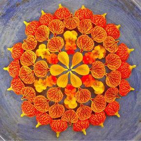 Kathy Klein's Natural Flower Mandalas | Tech Nontech Magazine | Scoop.it