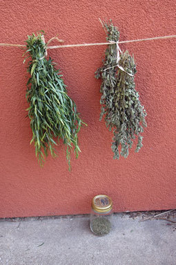Preserving Herbs for Best Flavor | Anything Goes in the Garden | Scoop.it