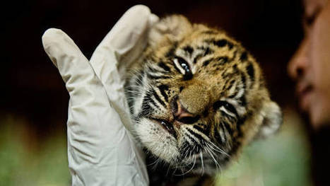 Thailand wants to shed its image as place for wildlife trafficking | Wildlife Trafficking: Who Does it? Allows it? | Scoop.it