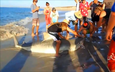 Shark Injured by Rope Cooperates With Brave Rescuers and Shows Appreciation After | Nature Animals humankind | Scoop.it