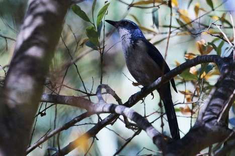 A study of island birds reveals that biodiversity is everywhere | Science | Scoop.it