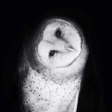 Beautifully Black and White – Animal Photography by Stephanie McDowell | Photo-reportage | Scoop.it