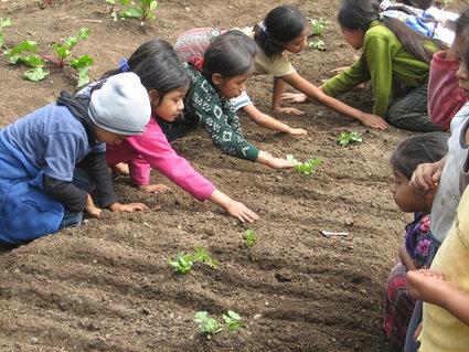 Growing Children 5:  Top tips for School Gardening activities | Connected Teens | Scoop.it