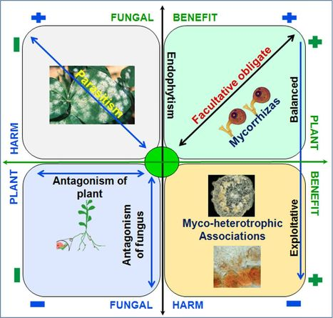 Friends or foes? Emerging insights from fungal interactions with plants | Discovery of Marine Natural Products | Scoop.it