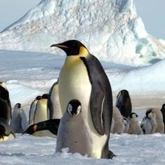 Penguins from Space: A New Satellite Census Doubles the Known Population of Emperors | Sinica Geography 400 | Scoop.it