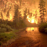 Forest Fires Are the New Normal | Motherboard | Climate Chaos News | Scoop.it
