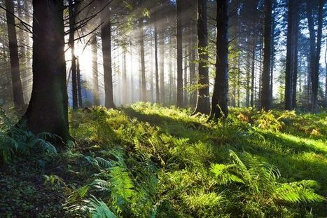 21 reasons why forests are important | bioremediation | Scoop.it