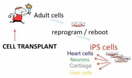 Fat Cells to Stem Cells - A Moonshot Idea - ENGINEERING.com | Stem cell | Scoop.it