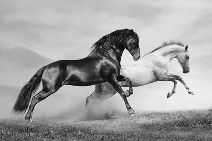 The Majesty of Horses Now on Canvas - Wall Art at Pixel Pad | Horses in art and history | Scoop.it