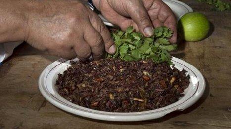 Mexique: vogue de la nourriture préhispanique à base d'insectes | Agriculture urbaine, architecture et urbanisme durable | Scoop.it
