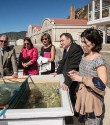Galician officials visit Chile to study new aquaculture legislation ... | Aquaculture (Global Aqua Link) | Scoop.it