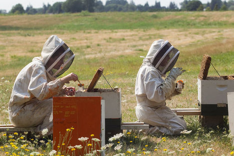 A Sharp Spike in Honeybee Deaths Deepens a Worrisome Trend | Geographic and Sustainability Literacy | Scoop.it