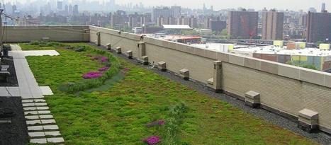 Techos verdes, una nueva tendencia urbana - Revista El Federal   Espacios Multiactorales   Scoop.it