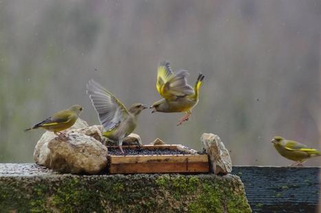 Sait-on pourquoi il n'y avait pas d'oiseaux dans les jardins l'hiver 2013-2014? | Art-nstuff | Scoop.it