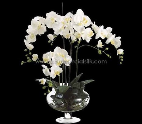 Silk White Phalaenopsis Orchid - Artificial Phalaenopsis Orchid | Artificial, Silk Trees Knowledge Center | Scoop.it
