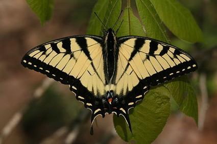 La mariposa de Austin. Una lección de excelencia educativa | Educacion, ecologia y TIC | Scoop.it