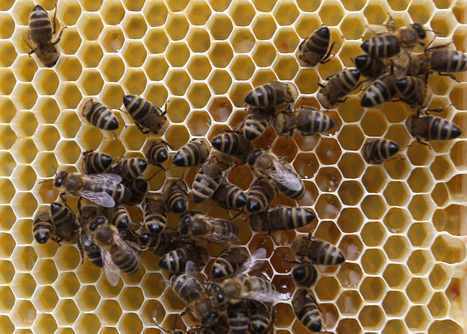 Pesticide Altering Genes in Honey Bees | My Funny Africa.. Bushwhacker anecdotes | Scoop.it