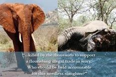 All Eyes Will Turn Towards China When The Wildlife Summit Starts Tomorrow   GarryRogers NatCon News   Scoop.it
