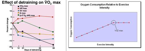 Consumo máximo de oxígeno (VO2máx): El indicador del grado de condición física del Runner | Running | Scoop.it