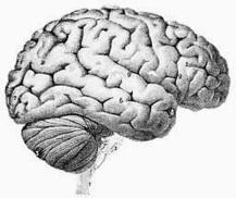 Our Brains Are Marvelous Things   PrairiePrincess   INFP   Scoop.it