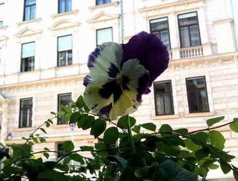 Guerrilla Gardener Plants Human Rights Statements | Urban Gardens | Annie Haven | Haven Brand | Scoop.it