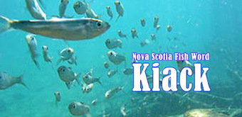 Casselmanual: KIACK is 100% CANUCK: a Neat Nova Scotia Fish ... | Nova Scotia Fishing | Scoop.it