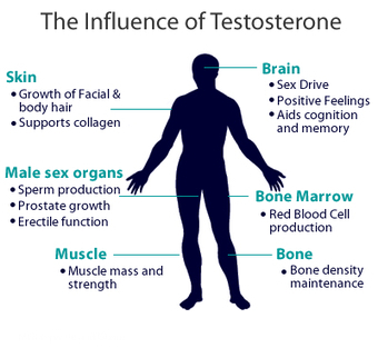 CAUSES ASSOCIATED WITH LOW TESTOSTERONE HORMONE   Healthy Fitness Tips   Scoop.it