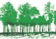 Télédétection : cartographier les forêts pour mieux les gérer   Irstea   Interprofession Forêt Bois des Pyrénées-Atlantiques   Scoop.it