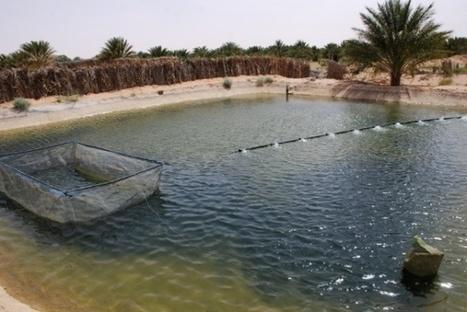 Algérie: La société civile appelée à contribuer au développement de la pêche et de l'aquaculture | CIHEAM Press Review | Scoop.it