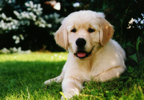 Just what you should know about dog training salt lake city - My Glam Network | dog grooming utah | Scoop.it
