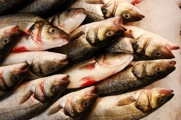 EPI Releases - Fisheries and Aquaculture Fact Sheet   EPI   Sustain Our Earth   Scoop.it