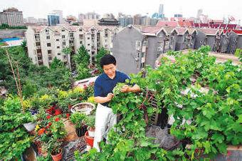 Beijing tendrá en breve más terrazas verdes | Cultivos Hidropónicos | Scoop.it