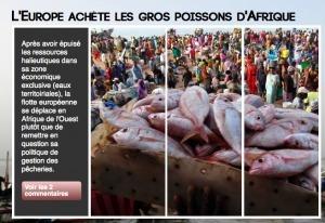 L'Europe achète les gros poissons de l'Afrique | Union Européenne, une construction dans la tourmente | Scoop.it