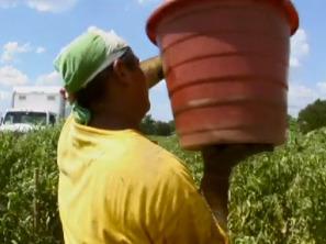 The Harvest / La Cosecha Documentary Film - The Harvest / La Cosecha Documentary Film | Local Food Systems | Scoop.it