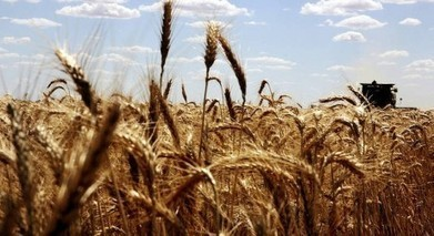ABARES: Aust farmers face long-term high dollar | Eco News | Rural Australia | Scoop.it