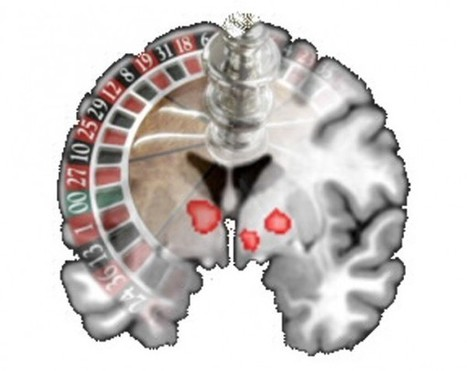 Gamblers More Attracted to Money Than Sex | Science/AAAS | News | With My Right Brain | Scoop.it