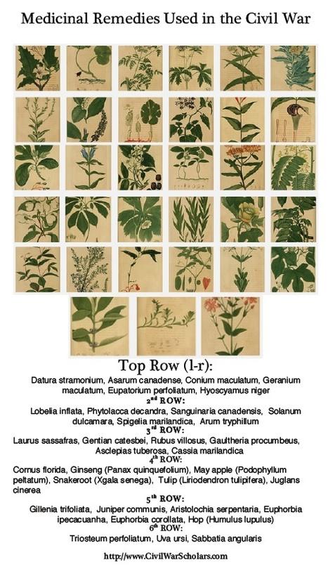 Medicinal Plants of the Civil War | Civil War Scholars | Herbaria | Scoop.it